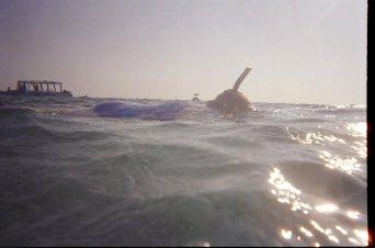 Michelle snorkeling