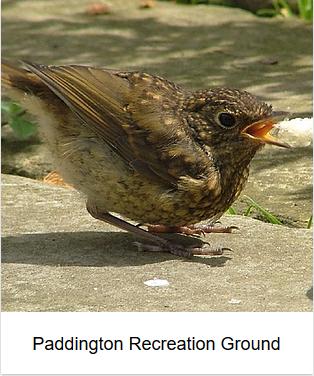 2006 - Paddington Recreation Ground thumb