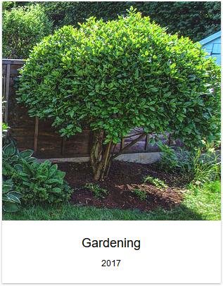 2017 - Gardening