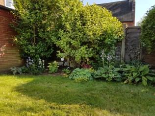 9th July Dank garden progress