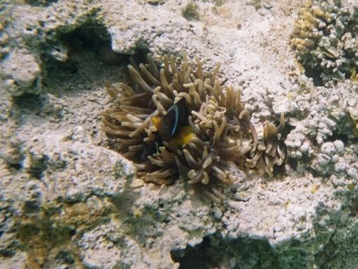 A classic Nemo shot!