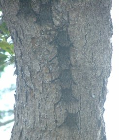 Our tour director, Daniel, pointed out wildlife all the way, including these bats,