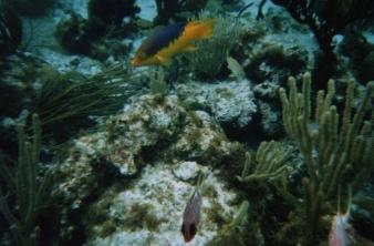 cayreeffish