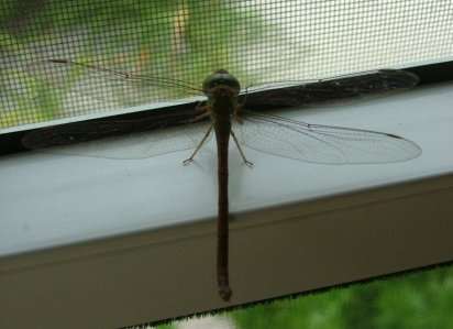 The fauna in and around the villa area consisted of - dragonflies,