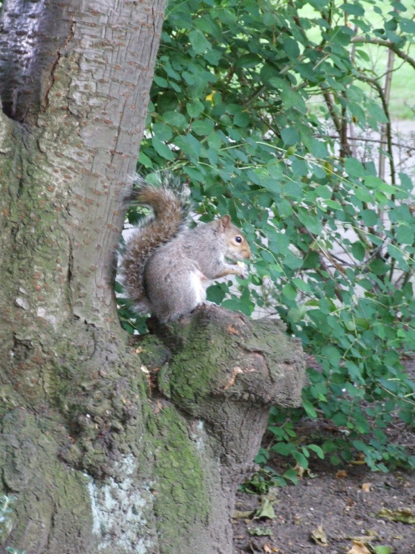 Aren't squirrels brilliant?