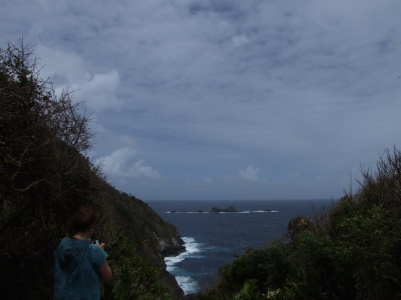From this vantage point we can watch Red-billed Tropicbirds and Magnificent Frigates on the wing.