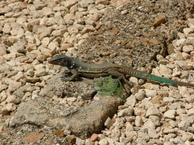Our one break from snorkelling was a trip to the National Park, where there are lot's of lizards