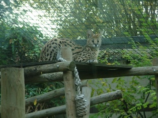..and another zoo piccie.