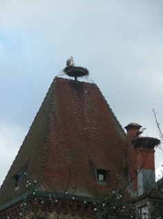Storks on top of the Hotel de Ville (Town Hall) in a small town we stopped in for lunch. Best light lunch we had - quiche lorraine and salad.