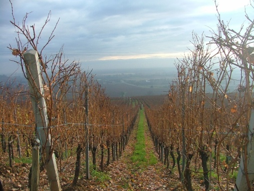 Lots and lots of vineyards. We finally managed to get on to the proper Route du Vin on our second day driving in the Alsace. Not the best time of year for sampling wines and I was driving anyway but still very picturesque.