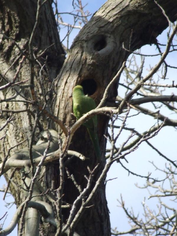 Paraquite nest