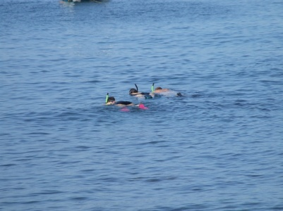 there is snorkelling