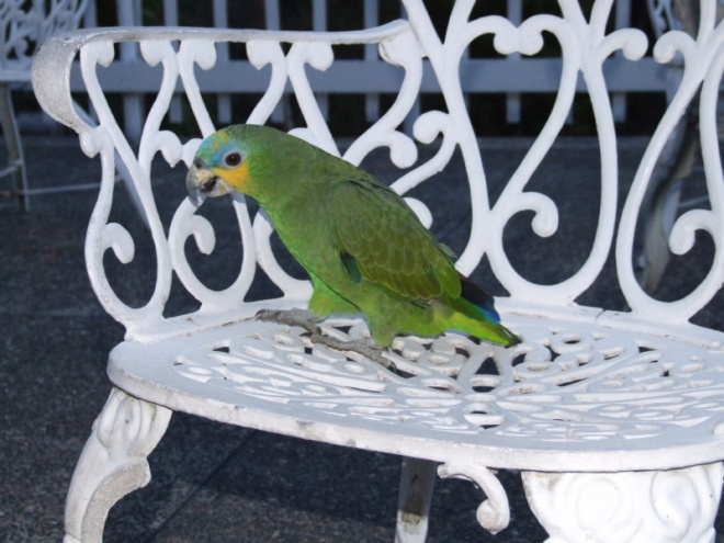 We are joined by the hotel's parrot, Pirate II