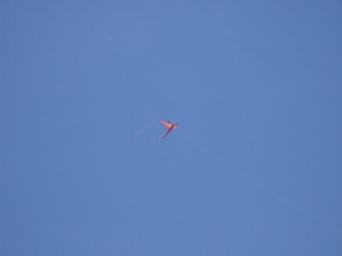 cool kite