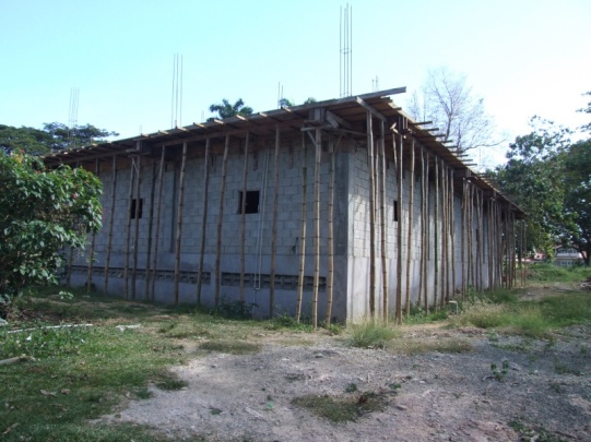 Bamboo was introduced to the island for use in construction