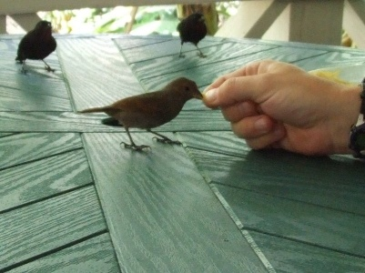 There is a cafe at the Botanic Gardens that does excellent chicken roti, and the finches are so tame they eat out of your hand.