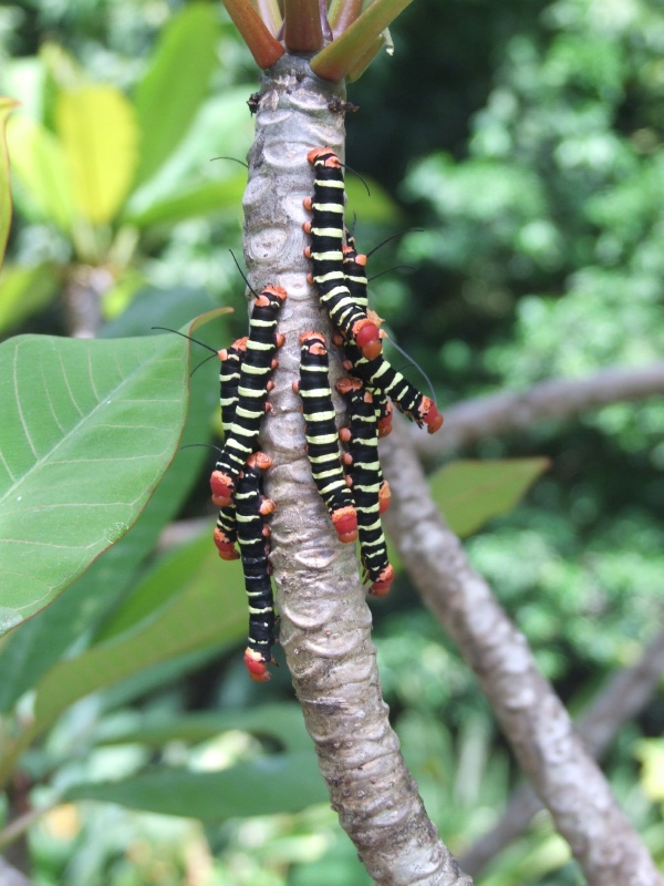 One of the trees by the lily pond was host to some caterpillars