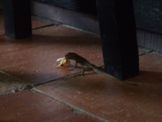 The cockroaches are dealt with by the lizards