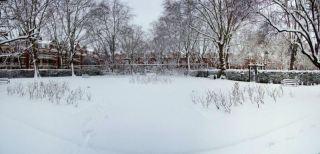 ...the quiet gardens