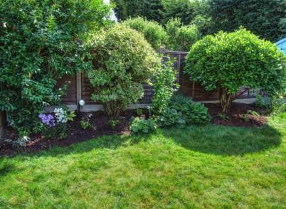 4th June Dank garden planting