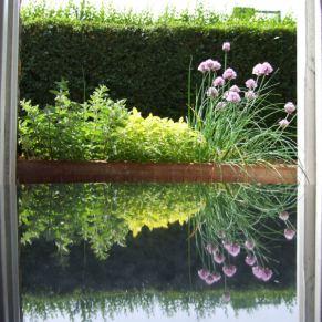 Our kitchen herb window box