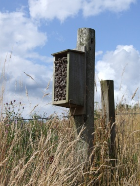 they have a bee hotel!