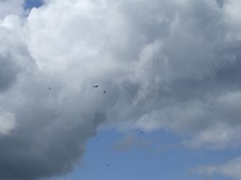 for the kites
