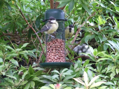 and watching the birds on the feeders