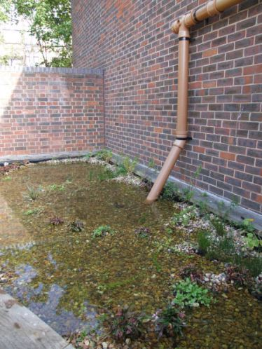 Rainwater feed into pond system.