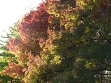 Trees on Lauderdale Avenue.