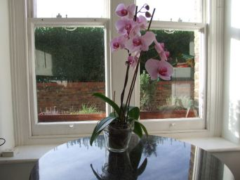 Our orchid.