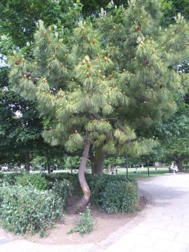 Furnival Gardens