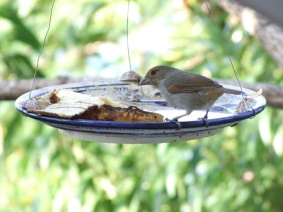 the bird feeder isn't as popular with the birds as at some other places we've stayed.