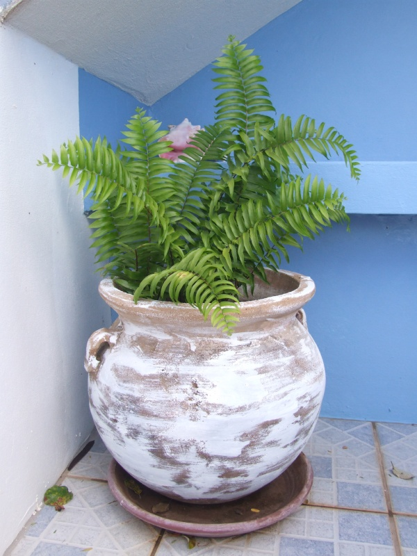 fern by the hot tub (which turned out not to be a time machine)