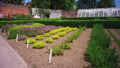 The herbs in the huge kitchen garden.