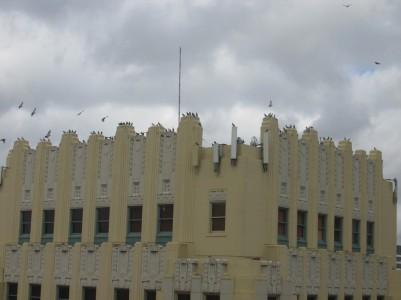 ...City of pigeons