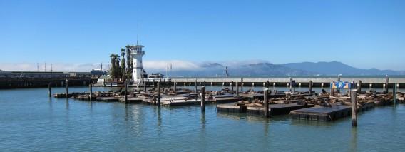 Sea lions at Pier 39 and Golden Gate Bridge