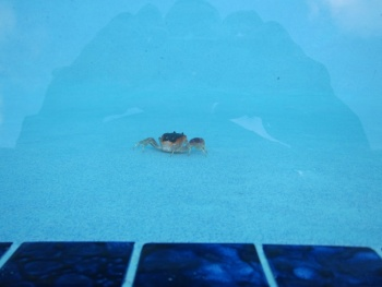 crab in the pool