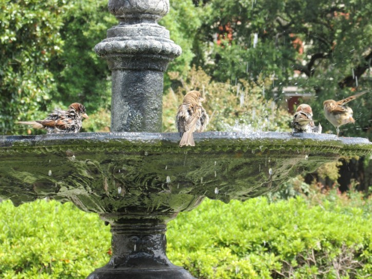 Bird bath in Jackson Square