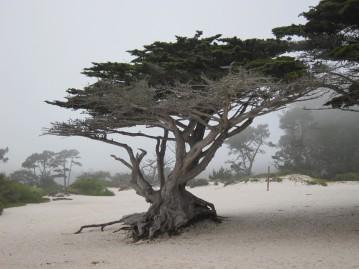 Foggy Carmel morning