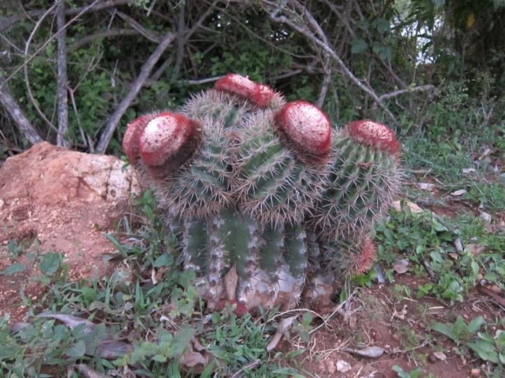 Freaky cactus