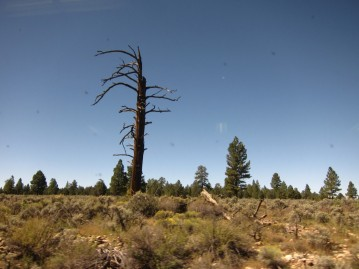 We saw lots of dead trees