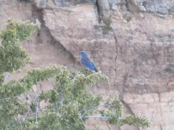Pretty blue bird. (tanager?)