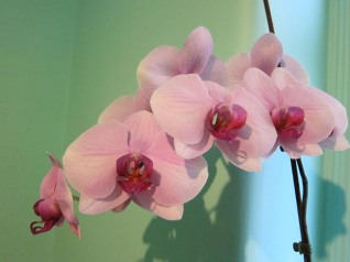 Our orchid