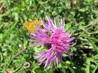 Regent's Park butterfly