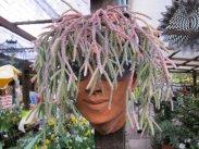 Rassels of Kensington plant nursery