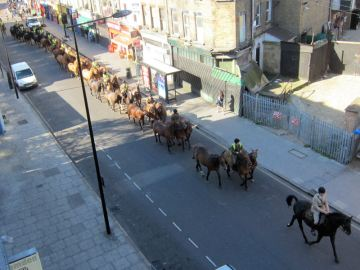 Horses going past the office!