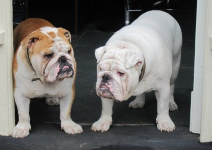 Dogs in the doorway of our local hairdressers