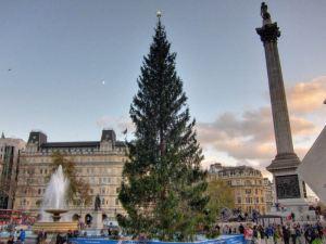 Christmas tree @ Trafalgar Square