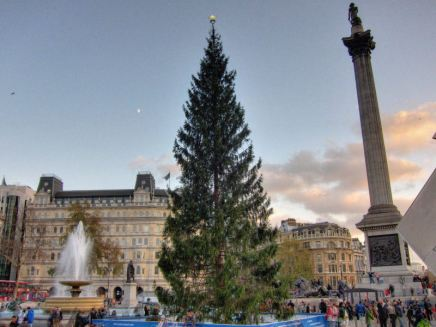 Christmas tree @ Trafalgar Square